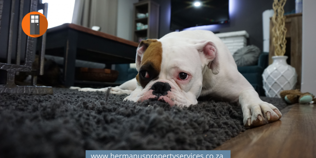 Pet Sitters & Services – Advertise Here