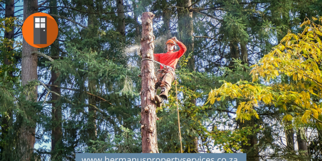 Plot Clearing & Tree Felling – Advertise Here