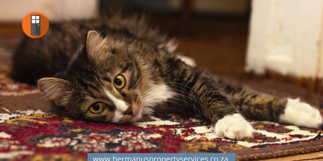 Carpet Cleaners in Hermanus – List Here