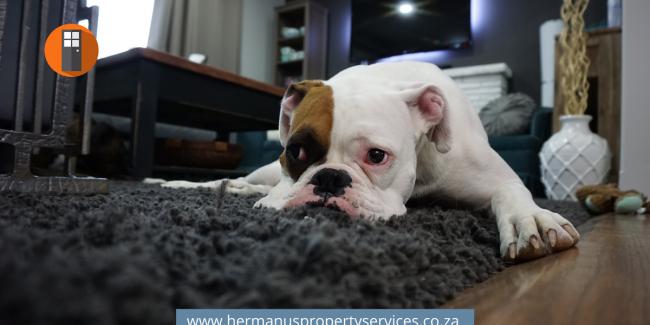 Pet Services in Hermanus – List Here